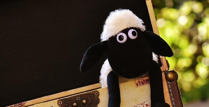 Das einsame Schaf